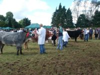 Moate Agricultural Show 2017